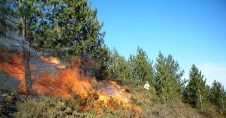 زمن كورونا يُسجل انخفاضا كبيرا في حرائق الغابات بالمغرب