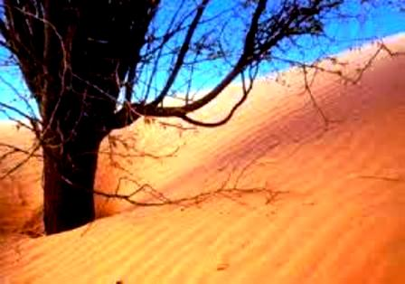 تهيئة هيدرو فلاحية في بوجدور لتثمين االأراضي الصحراوية