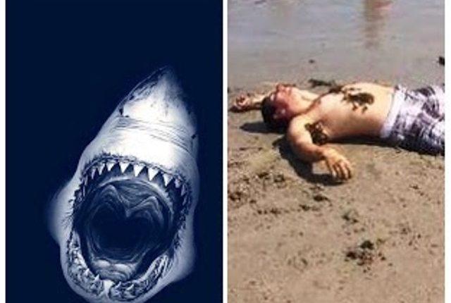 راكب أمواج يلقى حتفه بعد تمزيق سمكة قرش لساقه