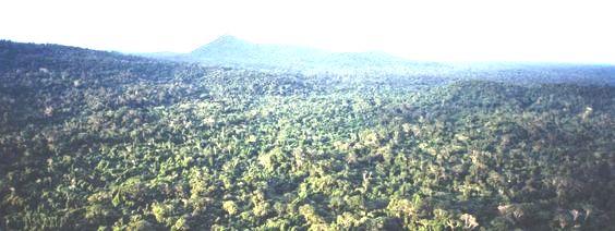 غابة الأمازون : رئة العالم المثيرة للجدل والمهددة بالتراجع