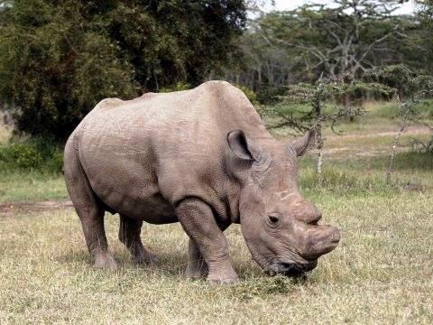 حديقة حيوان دانماركية تتخلص من وحيد قرن رغم ندرته