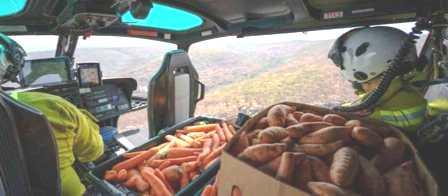 أطنان من البطاطس والجَزَرِ لإطعام حيوانات أستراليا